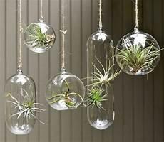 plante suspendue verre plantes suspendues fonctionnelles et d 233 coratives