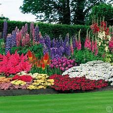 Balkonpflanzen Sonnig Pflegeleicht - 47 perennial garden 100 bulbs buy order yours now