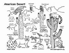 coloring pages ecosystem animals 16973 draw an american desert drawing lessons for a whole desert pdf http www exploringnature org