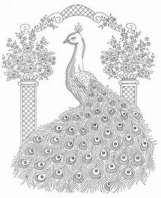 peacock coloring pages to and print for free