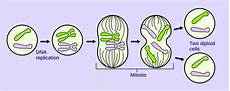 biology ch reproduction in organisms