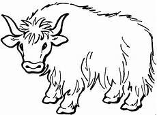 malvorlagen tiere gratis haariger bueffel ausmalbild malvorlage tiere