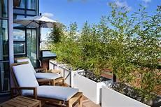 bambus für balkon bambus w donicy na balkonie lub tarasie bambusowy sen wszystko o bambusach ogrodowych i palmach