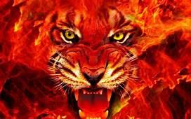 Animal Tiger Face Fire 4k Ultra Hd Wallpapers For Desktop