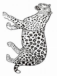 ausmalbilder gepard malvorlagen kostenlos zum ausdrucken