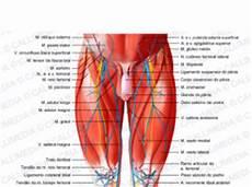 lacuna dei vasi anatomia archives medmedicine