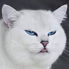 Kumpulan Dan Foto Kucing Lucu Info Binatang