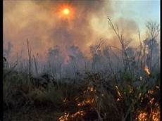 zerstörte natur vorher nachher naturschutz auf madagaskar so wird dort die natur