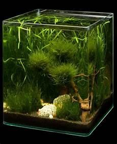 nano aquarium 30l dennerle nano cube 30l
