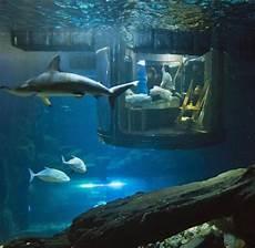 Wohnung Unter Wasser - fotografie die besten bilder des tages bilder fotos