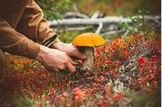 Pilze Im Körper Selbsttest - vier gr 252 nde mehr pilze zu essen