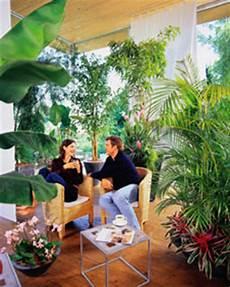 pflanzen für wintergarten die richtigen pflanzen f 252 r einen gr 252 nen fr 252 hlingshaften