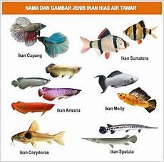 Gambar Foto Jenis Macam Nama Ikan Hias Air Tawar Flora