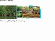 simbolos naturales del estado delta amacuro simbolos patrios naturales