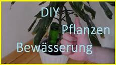 zimmerpflanzen im urlaub bewässern bew 228 sserungssystem f 252 r pflanzen selber bauen pflanzen im