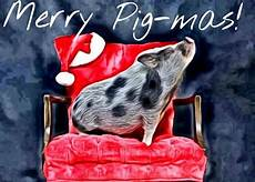 a pig merry christmas