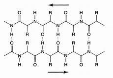 estructura secundaria de las proteinas temas de bioquimica