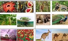 56 Populer Gambar Flora Dan Fauna Negara Singapura