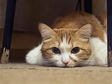 meine katze frisst nicht mehr und ist apathisch tiermag