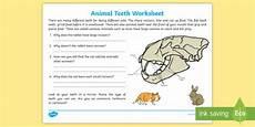 animal teeth worksheets 14367 animals and their teeth worksheet science resource twinkl