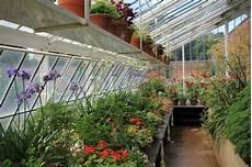 ganzjahresbepflanzung für balkonkästen indoors warm greenhouse with cutting stock photo