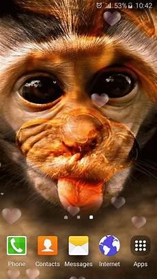 Gambar Monyet Senyum Koleksi Gambar Hd