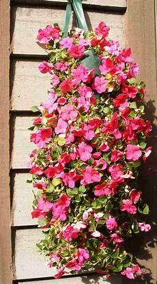 plantes retombantes 224 fleurs et vivaces pour un ext 233 rieur