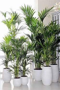 Pflanzen Für Dunkle Ecken In Der Wohnung - zimmerpflanzen f 252 r wenig licht 21 gr 252 ne und bl 252 hende arten