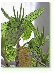 Zimmerpflanzen Wenig Licht Im Schatten Pflanzenfreunde