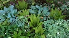 farn pflege draußen blumen und pflanzen f 252 r standorte die im schatten liegen