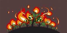Cegah Kebakaran Hutan Pemerintah Diminta Menata