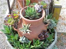 piante grasse in vaso 17 best images about house plants on growing