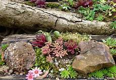 kleinen steingarten anlegen anemoni ποιά φυτά είναι κατάλληλα για βραχόκηπους