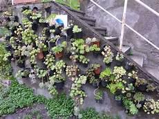 giardini piante grasse per esterno piccolo giardino in verticale di piante grasse