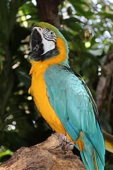 images gratuites oiseau faune le bec color 233 lorikeet