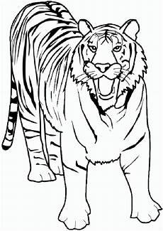 Malvorlagen Gratis Update Malvorlagen Gratis Tiger