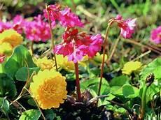 teichpflanzen richtig pflanzen teichpflanzen sind unvermeidbar pflanzen f 252 r teich und
