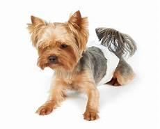 hund in wohnung mein hund pinkelt in die wohnung 187 das solltest du jetzt tun