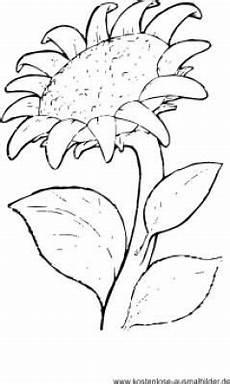 ausmalbild sonnenblume malvorlagen blumen blumen
