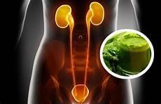 Besser Gesund Leben - hausmittel f 252 r eine nierenreinigung hausmittel besser