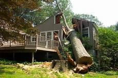 couper un arbre 12261 coupes d arbres photos