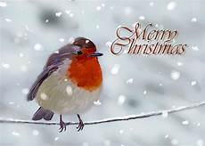 merry christmas robin pictures merry christmas robin digital art by arie der wijst
