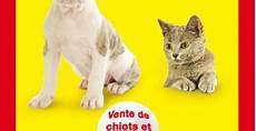 salon du chiot nantes salons expos chiens chats animaux morbihan 56 le mag des animaux