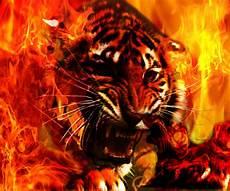 34 Wallpaper Gambar Harimau Api Richi Wallpaper