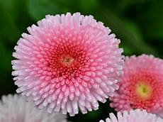 Flower Wallpaper Photo by Flower Wallpaper For Desktop With Macro Photo Of Pink