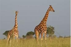 Gambar Petualangan Margasatwa Binatang Menyusui Fauna