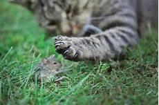 Luxprivat Warum Bringen Katzen M 228 Use Mit Nach Haus