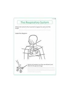 respiratory system worksheet by thescienceresourcebank teaching resources