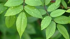 Green Leaf Wallpaper