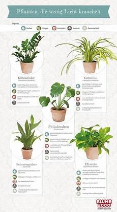 planzen die wenig licht brauchen pflanzen philodendron